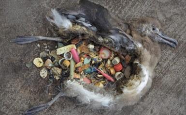 stop plastique pétition : oiseaux