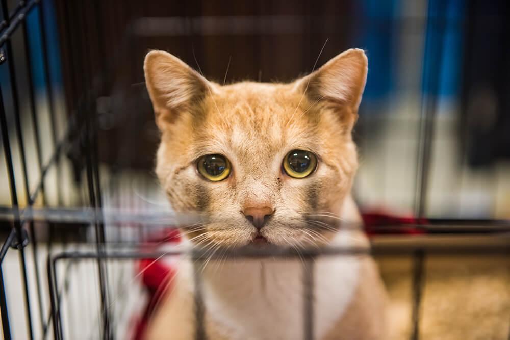 pétition abandon chat