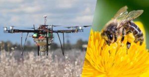 Drones vs abeilles