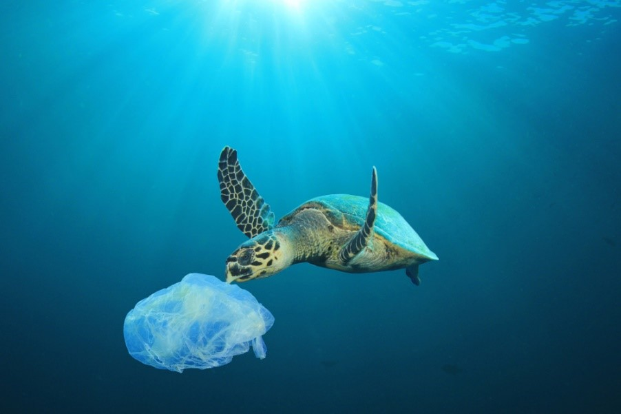 Tortue pollution plastique